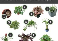 Easy Houseplants Safe For Cats