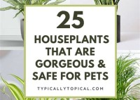 Houseplants That Are Good For Cats To Eat