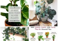 Houseplants That Are Not Harmful To Cats