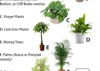 Tall House Plants Safe For Pets