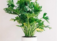 The Best Large Houseplants